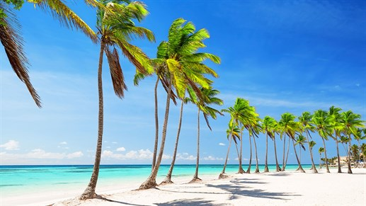Dominican Republic - palm trees on beach